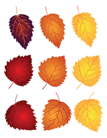 Birch Tree Leaves in Changing Fall Colors Isolated on White Background Illustration