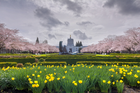 state of oregon: Oregon State Capitol Building in Salem Oregon with Daffodil flowers  and cherry blossom trees in spring season