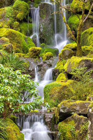 Waterfall at Japanese Garden with green moss on rocks in Spring Season Stockfoto