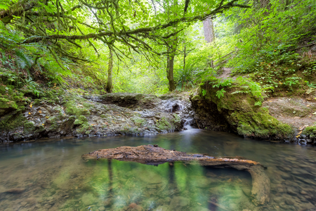 Balch Creek along Wildwood Trail in Portland Oregon Stock Photo