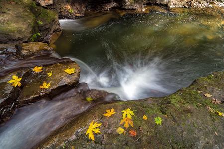 rock creek: Fall Season at Rock Creek waterfall with fallen Maple Tree leaves in Clackamas Oregon