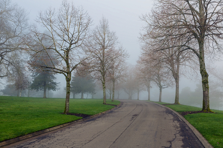 cold season: Foggy cold morning in the park in Portland Oregon during winter season Stock Photo