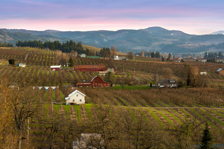 northwest: Pear Tree Farm Orchards in Hood River Oregon