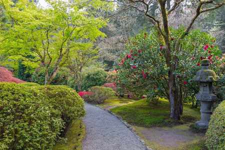 Path In Portland Japanese Garden With Manicured Plants Shrubs Trees And  Stone Lantern In Springtime Stock