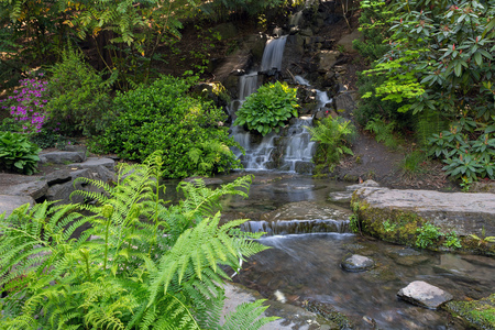 Waterfall by Ferns at Crystal Springs Rhododendron Garden in Portland Oregon during Spring Season