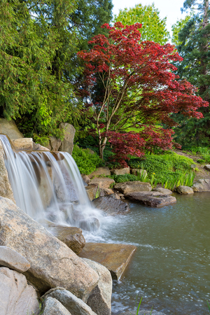 Waterfall and Pond in landscaped backyard garden with red maple tree and plants