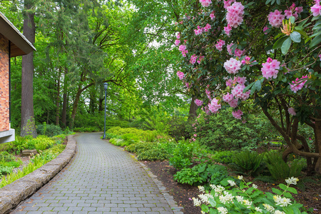 Pink Rhododendron flowers in bloom and plants along garden paver brick path