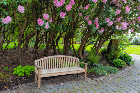 Garden Wood Bench under the flowering Rhododendron shrubs in the park in Spring Season Stock Photo