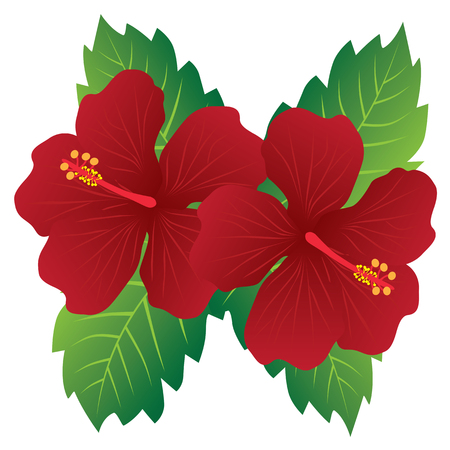 Malaysia National Flower Red Hibiscus flowers with leaves color illustration