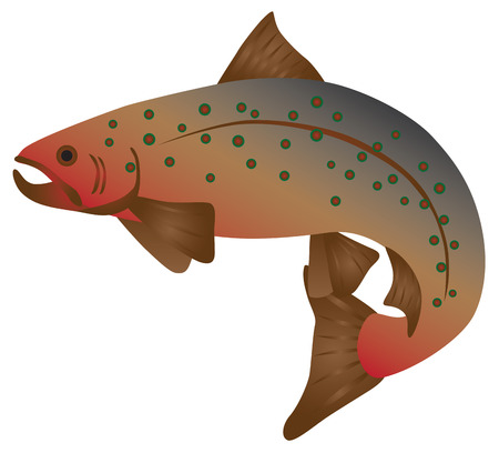 Brook Trout Fish in Color Illustration Ilustração