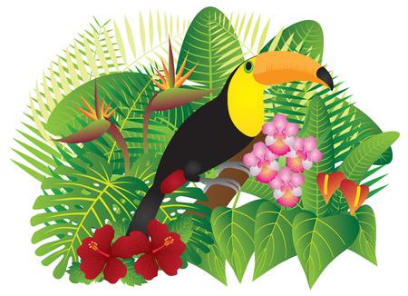 熱帯雨林ジャングルの植物葉花とオオハシ鳥ホワイト バック グラウンド カラー イラストを分離