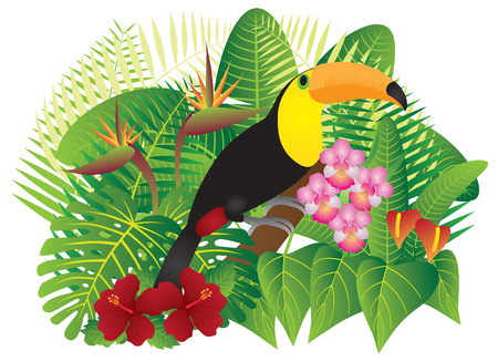 Tropical Rain Forest  Jungle Plants with Leaves Flowers and Toucan Bird Isolated on White Background Color Illustration