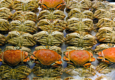 pike place: Rolls of Dungeness crabs display on ice at fresh seafood stall in public market