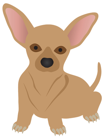 dog: Chihuahua Dog Breed Color Isolated on White Background Illustration