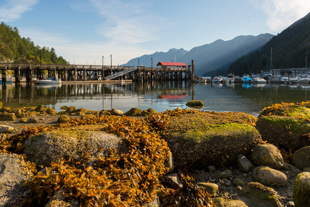 Marina at Horseshoe Bay in British Columbia Canada during low tide Stock Photo