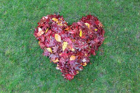 Fallen red maple tree leaves raked into heart shape on green grass lawn in autumn fall season Stock Photo