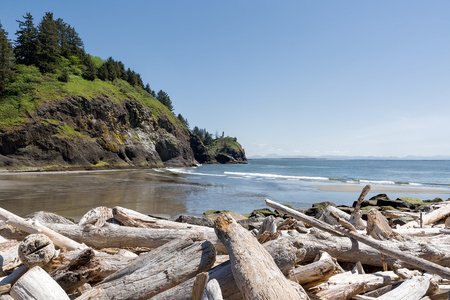 Driftwood at Waikiki Beach by Lighthouse at Cape Disappointment State Park in Washington State