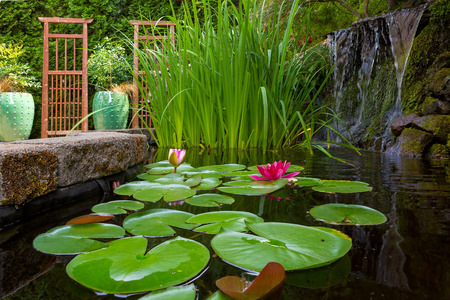 Backyard garden pond with waterfall water lilies iris trellis and container pots with plants