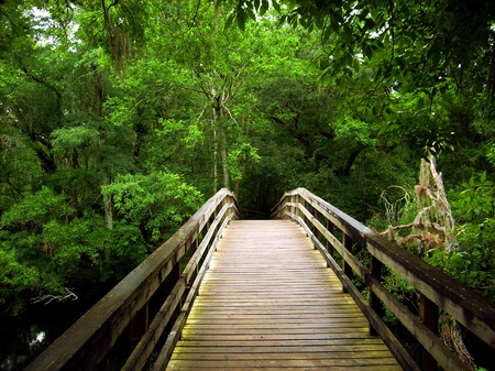 A bridge at Hillsborough River State Park in Florida