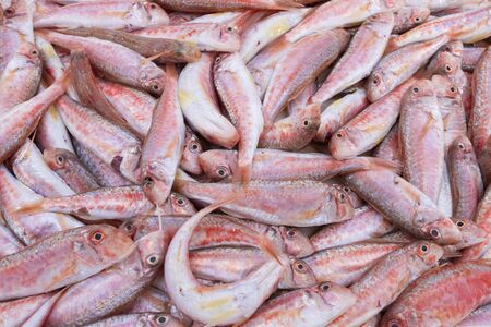 top view of fresh Mediterranean red mullets in a market