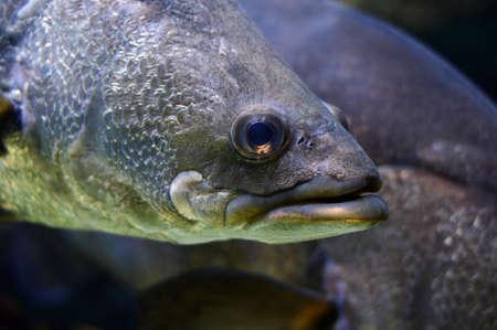 submersion: Tropical fish in an aquarium.