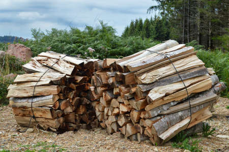 Piles of wood logs in the forest. Stock Photo