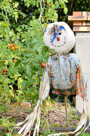 A vegetable garden with a scarecrow and tomato plants.