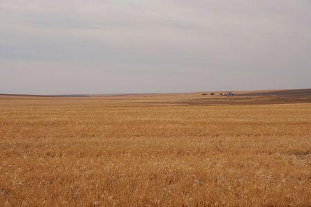 Wheat Farm photo