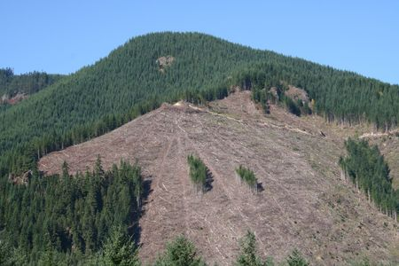 pacific northwest: Clearcut Logging in Pacific Northwest