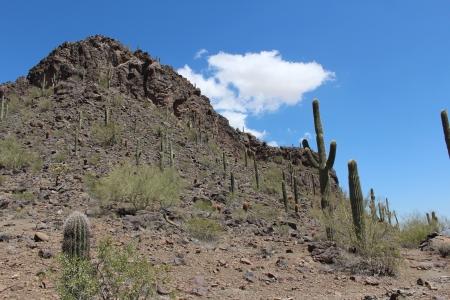 sonoran: Arizona Sonoran Desert Landscape Stock Photo