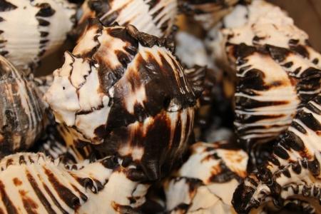 beachcomb: Ceramic Vase Shells Closeup