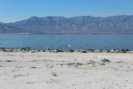 Salton Sea Landscape Southern California photo