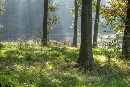 Backlit oaks in front of a forest clearing Stock Photo