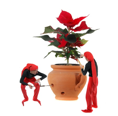 Elves molesting a christmas flower Stock Photo - 11281884