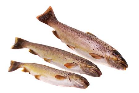 salmo: European trout  Salmo trutt