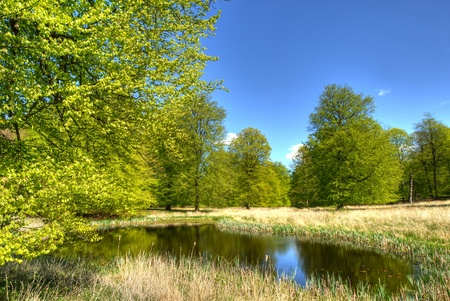 Beech trees at spring