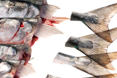 The Garfish  Belone belone   Heads and tails of garfis Stock Photo - 13758094