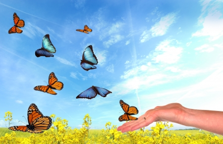 Butterflies being released