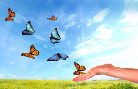リリースされている蝶