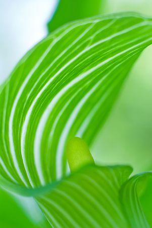 不思議なの美しい緑の葉