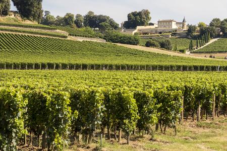 Saint-Emilion, France. Vineyards at the Jurisdiction of Saint-Emilion Stock Photo