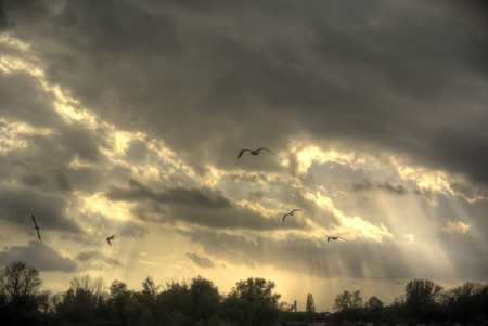 Flock of gulls above Danube in the evening