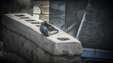 Two pigeons in love on a rooftop Stockfoto