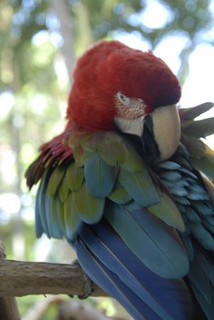 Bird - Parrot - Macaw
