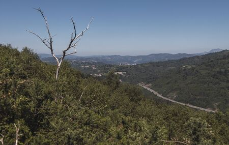 Landscape of a sunny day in the mountains with a dead tree in the foreground and a highway at the bottom of the valley in a sunny day