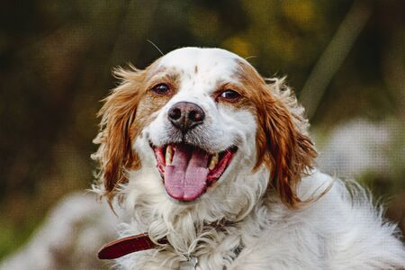 Portrait of a dog looking directly to the camera