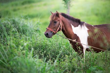 Horse Standard-Bild