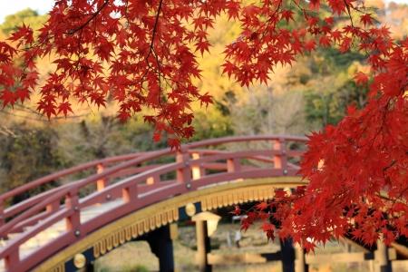 秋の風景のイメージの日本のカエデの葉