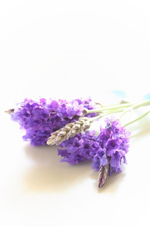 lavendar: close up of lavender on white background with copy space