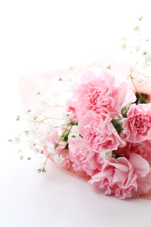 Elegant pink carnation for Mother s day image